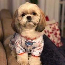 cliente Pet - paciente - animal natural - an 4
