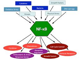 MODULAÇÃO DO FATOR NF-KB EM CÃES