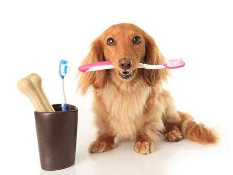 Entenda um pouco mais sobre a escovação dos dentes do seu peludo