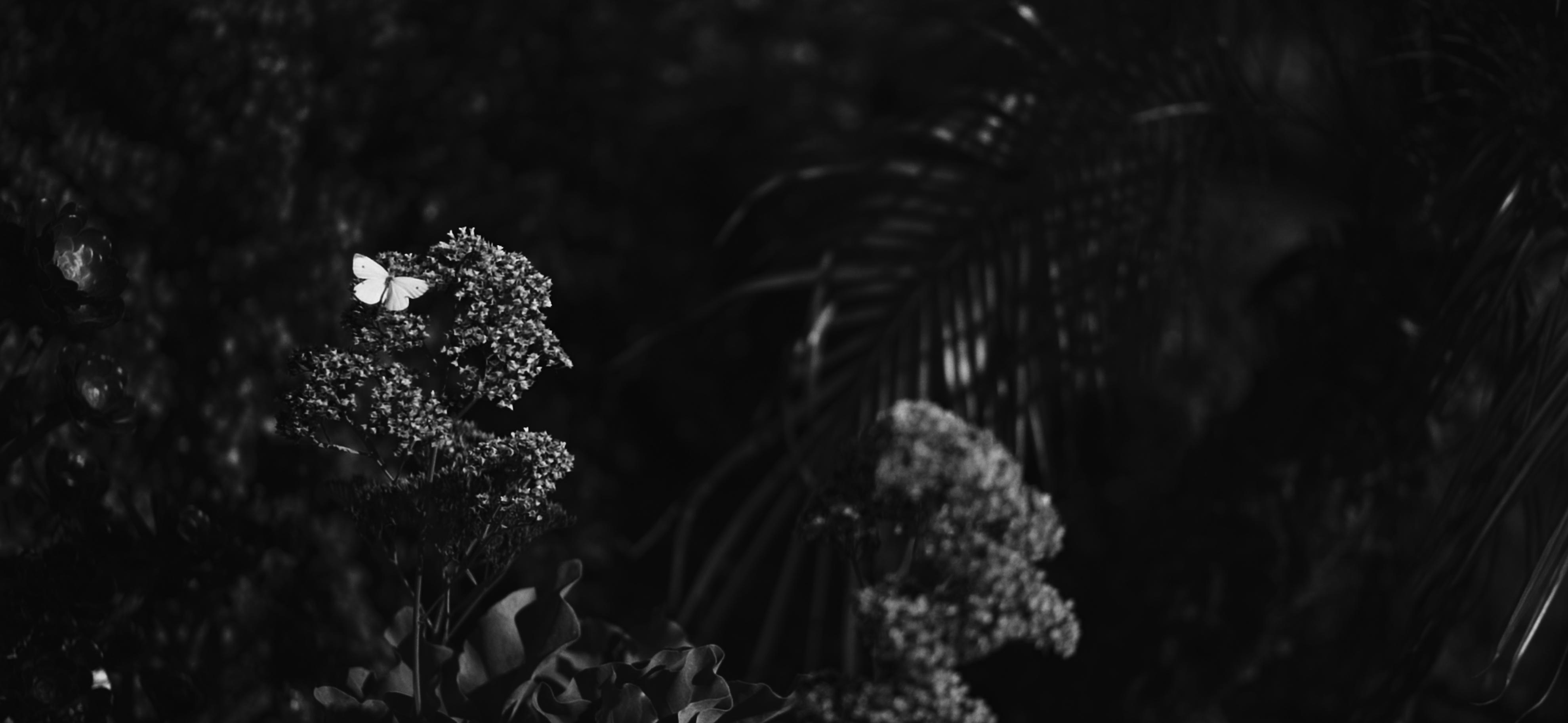 Screen Shot 2019-09-11 at 3.09.01 PM