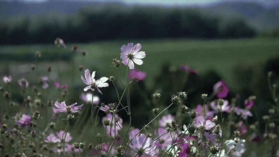 Landscaping Mylawncrew