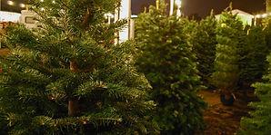 TH Christmas Tree Lot.jpg