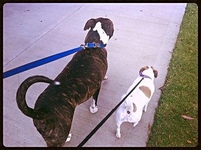 Dog Walking Queensbury