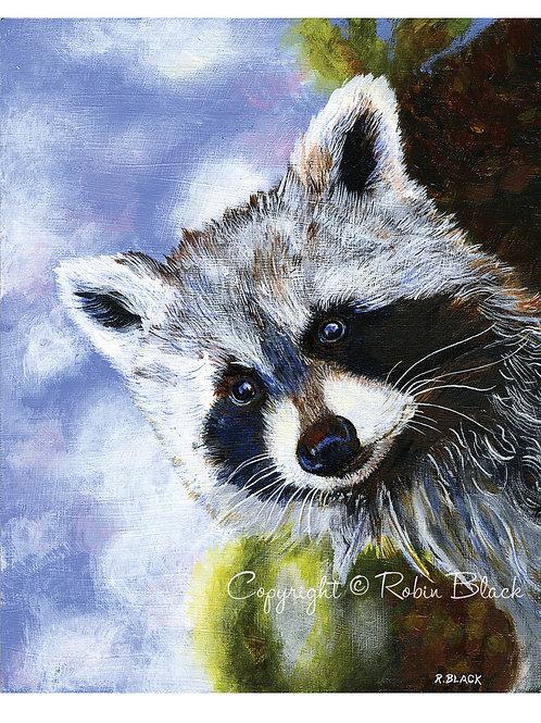 Woodland Raccoon Print