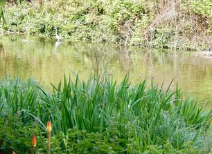 Ducklings in a row