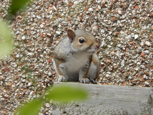 A Squirrel comes to visit