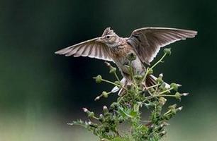 Warren Farm - A 'Nature Reserve' Under Threat