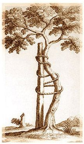 tree of andry.png