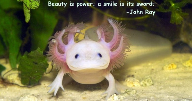 Beauty and Smile