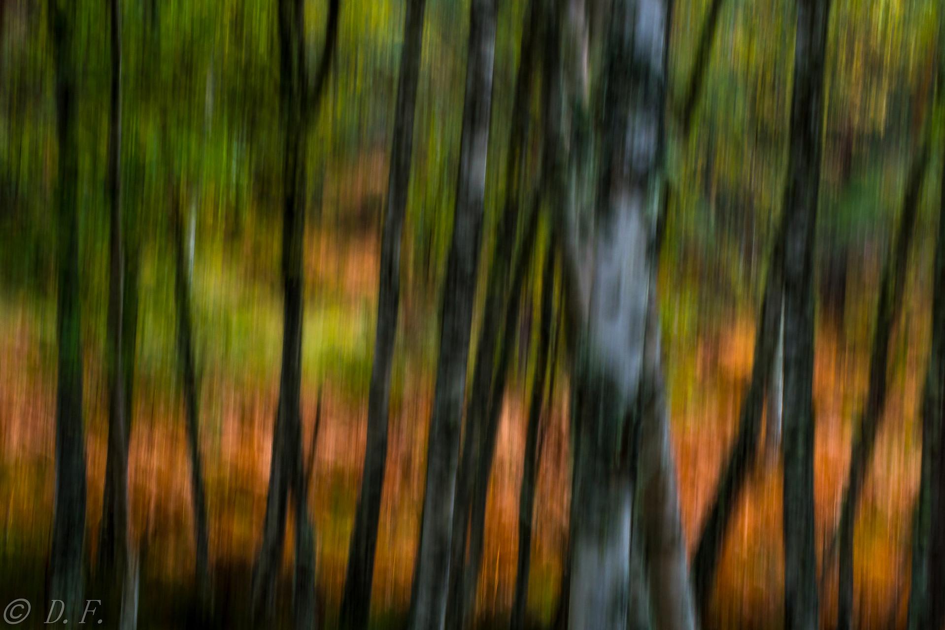 Herbst in Rothiemurchus