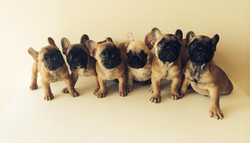 Little Pooping Machines <3