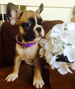 Princess Daphne