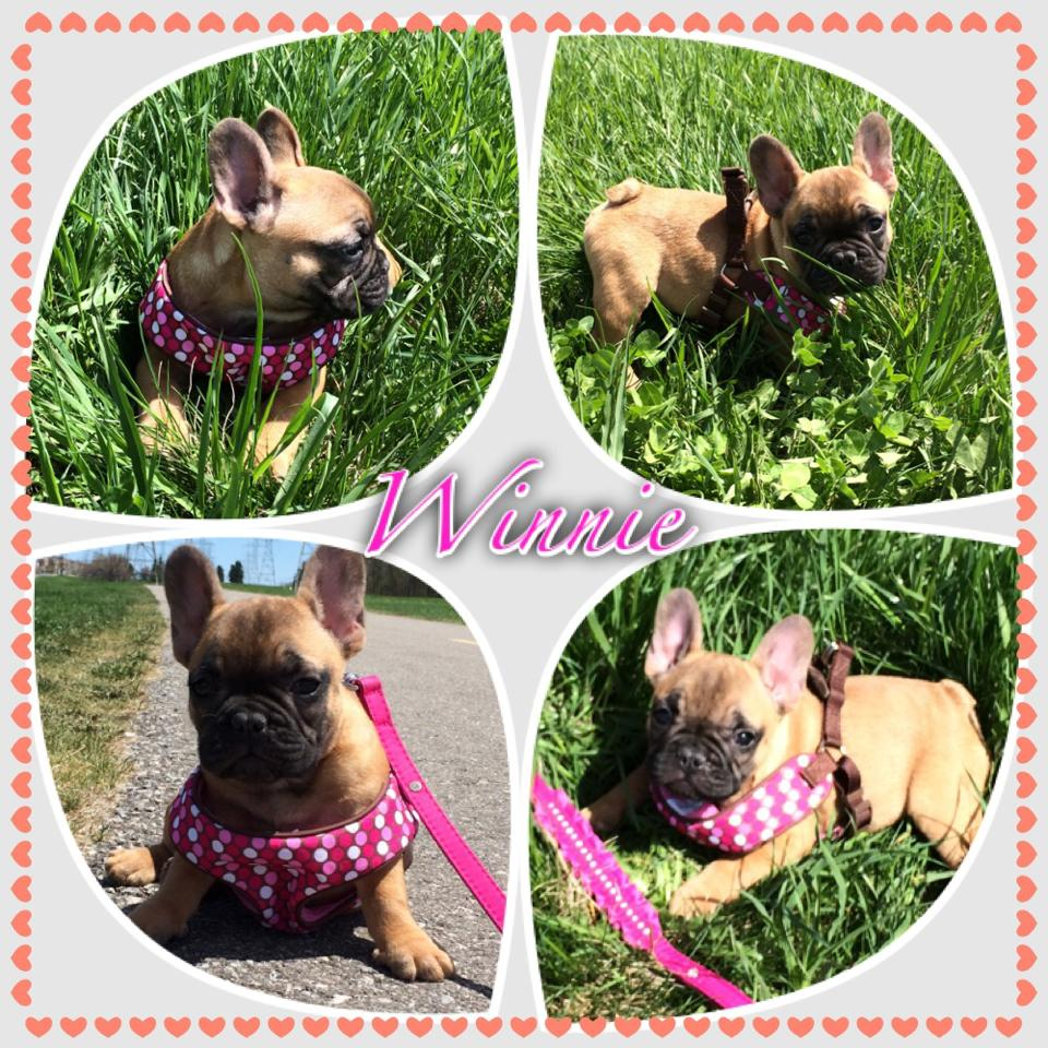 Winnie's day in the park