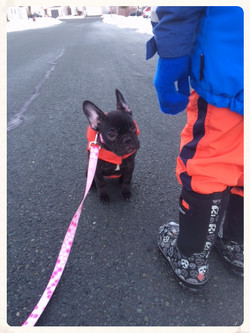 Mable on a walk
