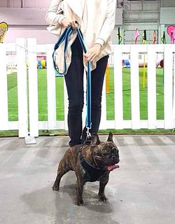 At the 2017 National Pet Expo