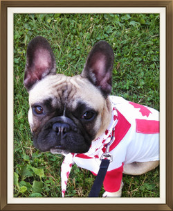 Bogart is ready for Canada Day!