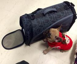 Flying to Nova Scotia!