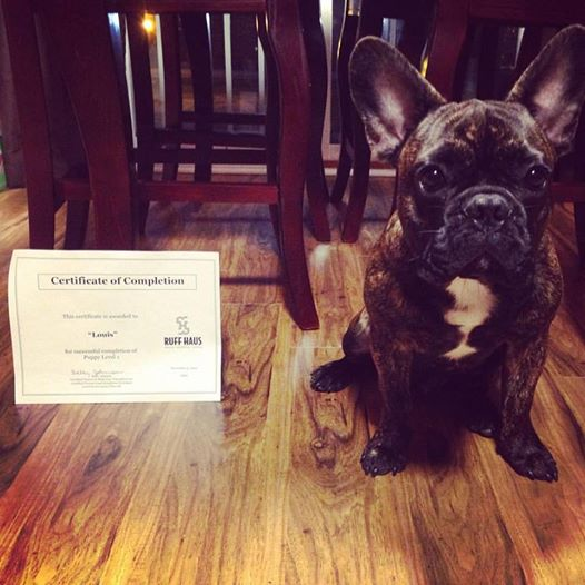 Louie passed his training!