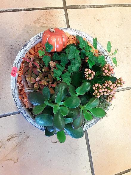 Panier de plantes vivaces