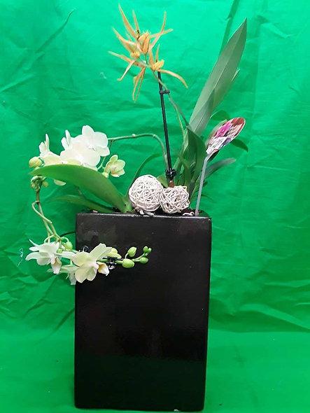 Assemblage d'orchidées
