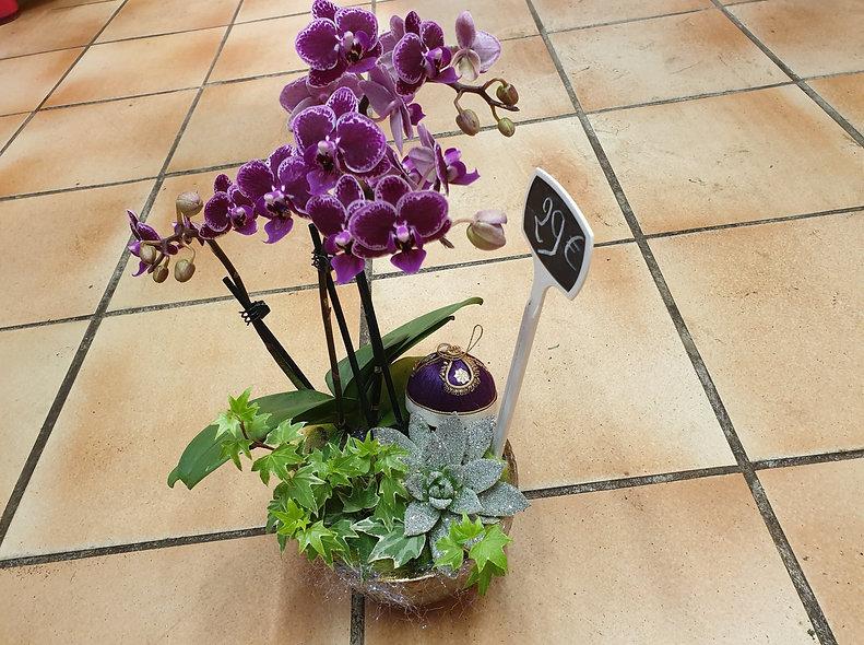 Orchidée en fêtes