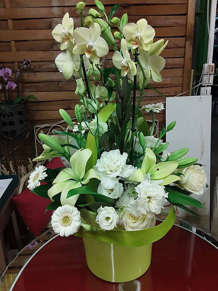 Anis orchidée et fleurs