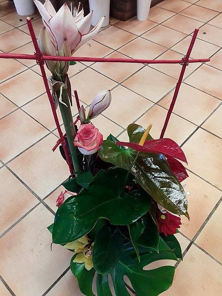 Anthurium fleurit