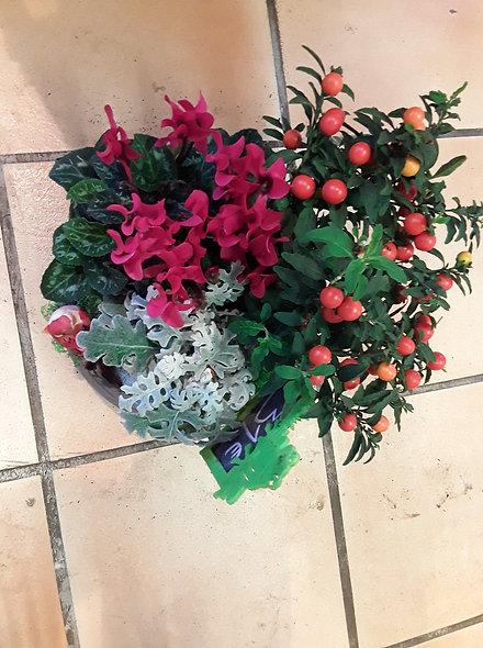 Composition céramique plantes vivaces