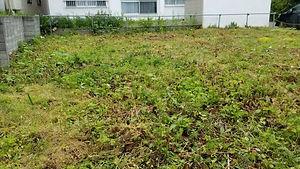 草刈り作業1.jpg