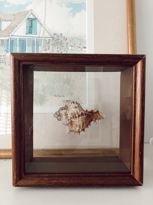 Vintage Shell Shadow Box