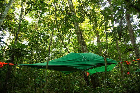 Camping on tree-tents in Madidi National Park