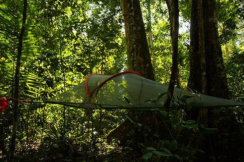 Accomodation in treetents Madidi National Park