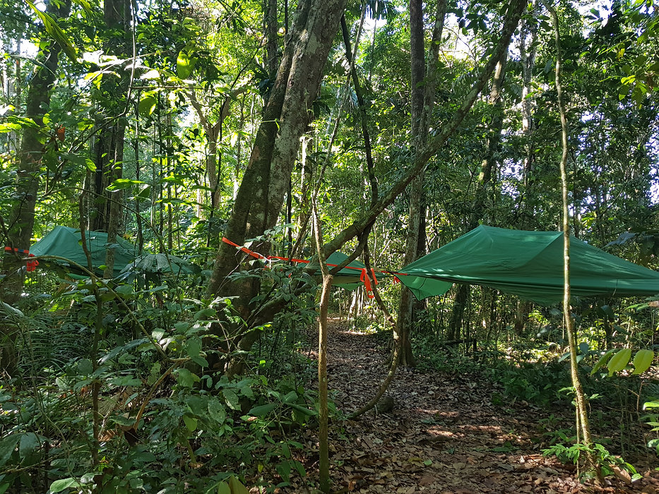 Jungle and Pampas Tours with Yuruma Journeys and Tree-tents
