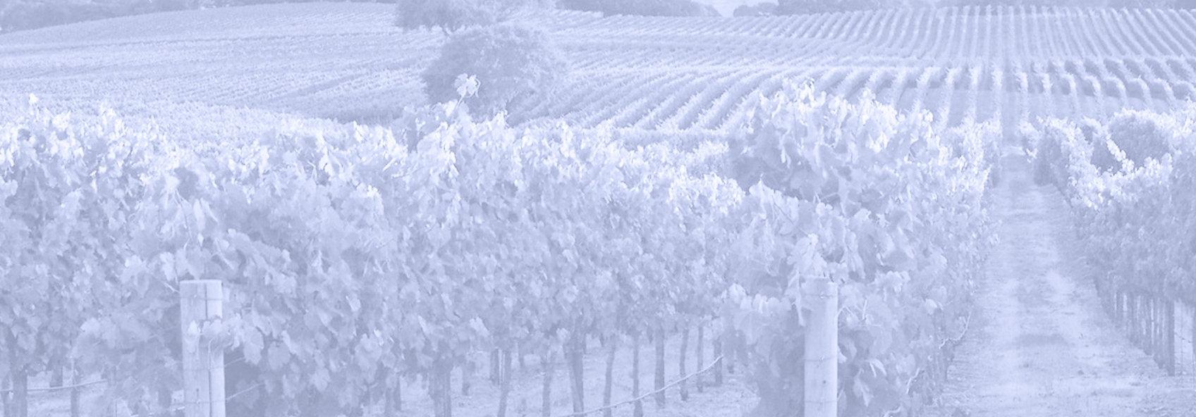 vineyard_edited-1_edited_edited.jpg