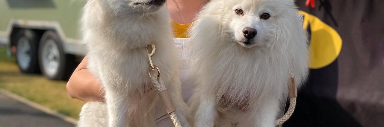 Soul Night Market Dog Friendly.JPG
