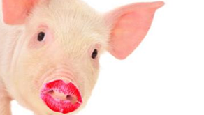 Putting Lipstick on a Pig