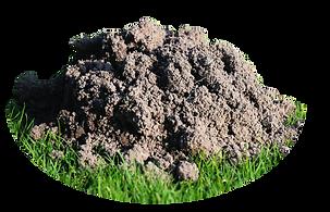 Mole Mound.PNG