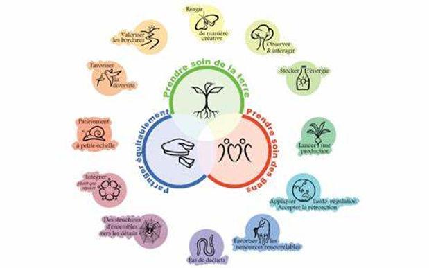 fleur permaculture 2.jpg