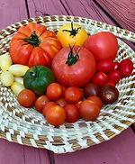 Focaccia tomatoes.jpeg
