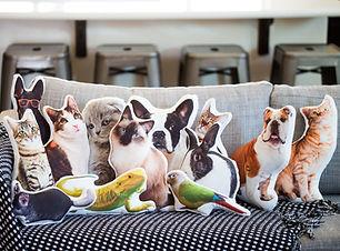 pet pillows.jpg