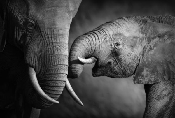 Elefantes-600x405.jpg