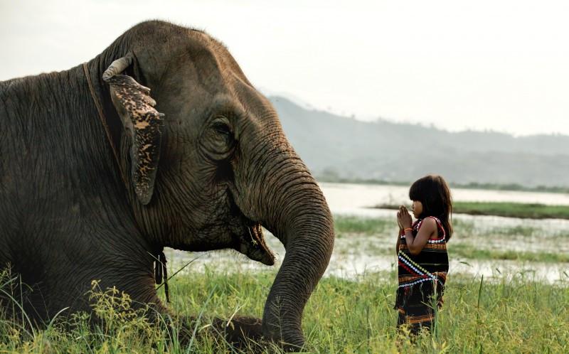 1_CATERS_GIRL_BEST_FRIENDS_ELEPHANT_02-800x498.jpg