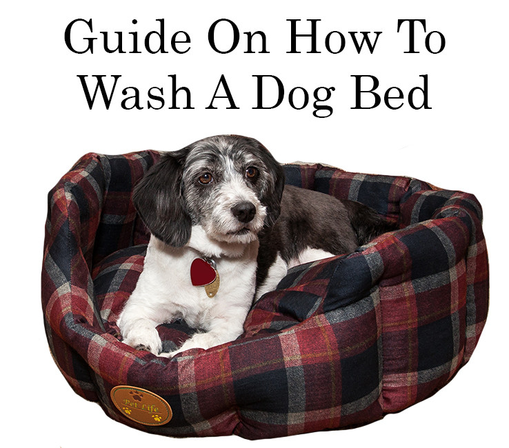 Guide On How To Wash A Dog Bed