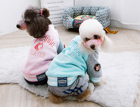 DOG HOODIES.jpg