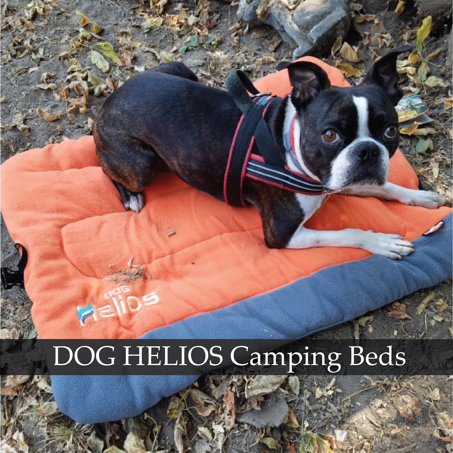 helios travel dog camping beds