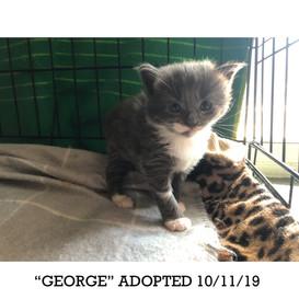George Adopted 10/11/19