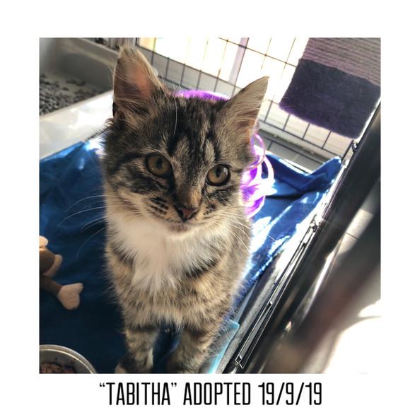 Tabitha Adopted 19/9/19