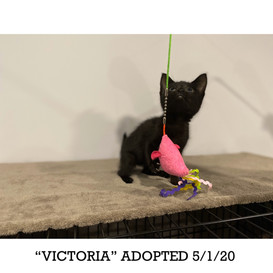 Victoria Adopted 5/1/20