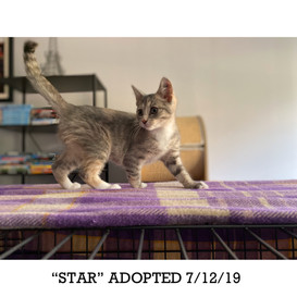 Star Adopted 7/12/19