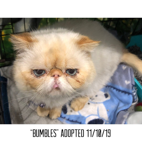 Bumbles Adopted 11/10/19